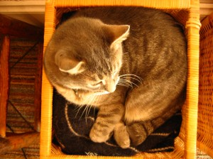 Mr. Shadow, a grey tabby cat, sleeping in a basket on a pile of sweaters.