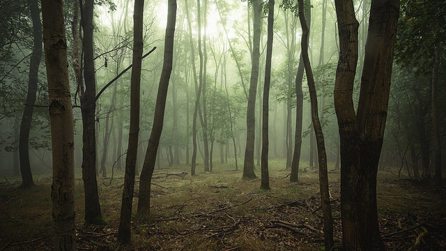 A misty forest.