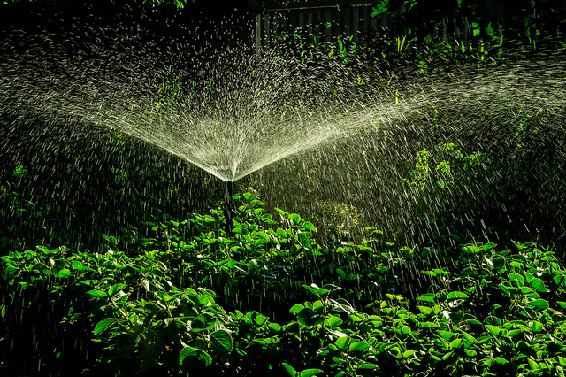 A sprinkler running in a lush green garden