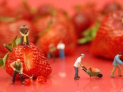 A staged photo of figurines appearing to mine strawberries.