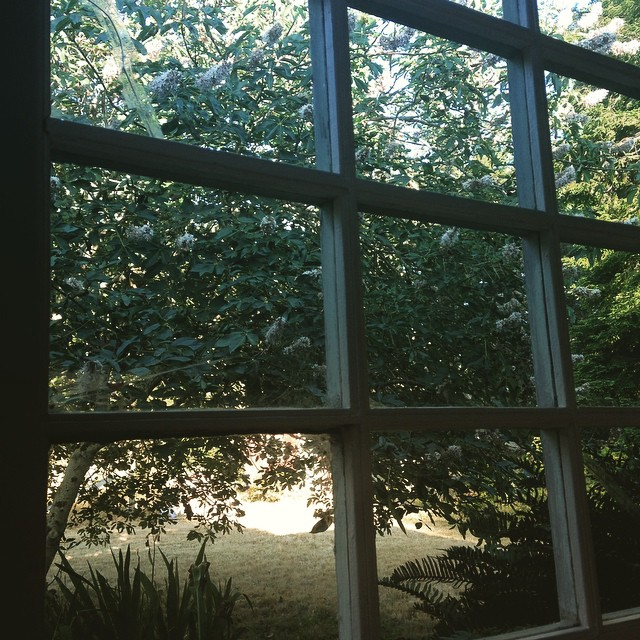 Looking out into my yard