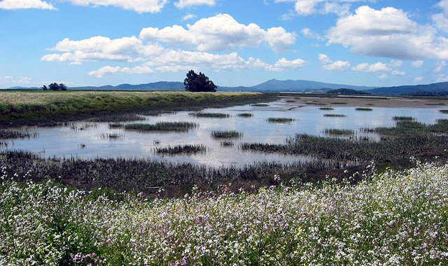 Restored wetlands on the Sears Point Ranch, looking stunning under a blue sky.