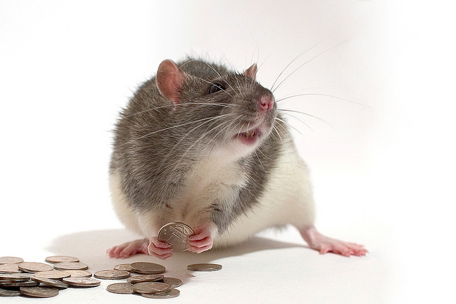 A rat playing with coins.