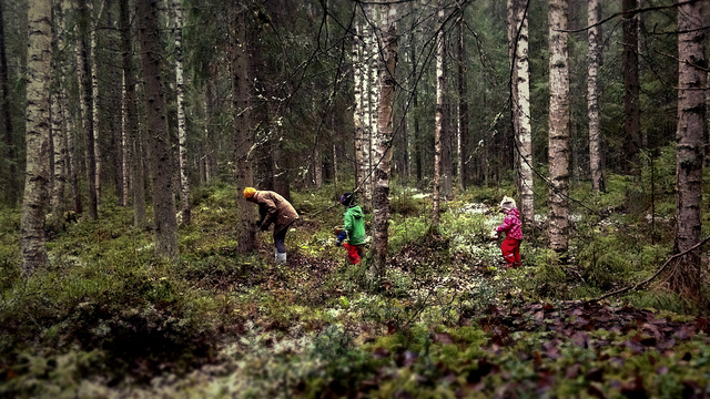 A family foraging for edible plants in the forest.
