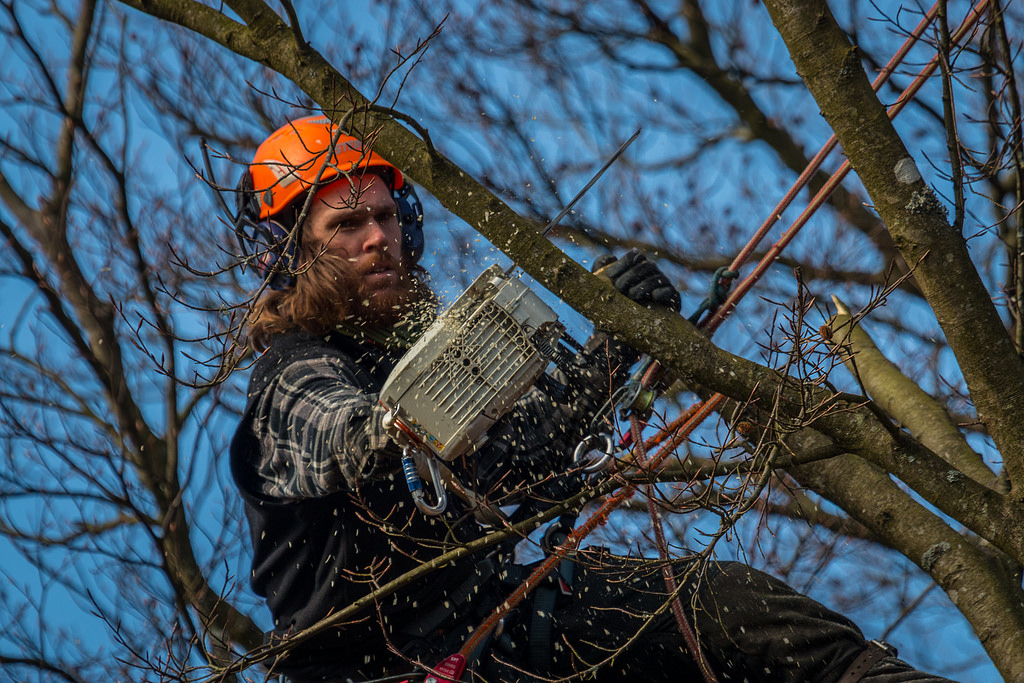 A person trimming a tree with a chainsaw.