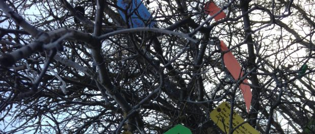 Pieces of paper tied in a wishing tree.