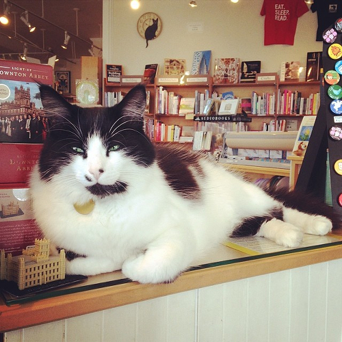 Catsby, a fluffy black and white cat, sitting on the counter at the Gallery Bookshop.