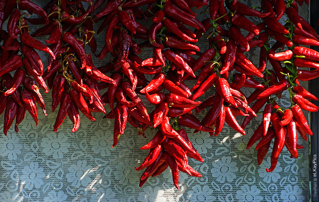 An array of chili peppers hanging to dry.