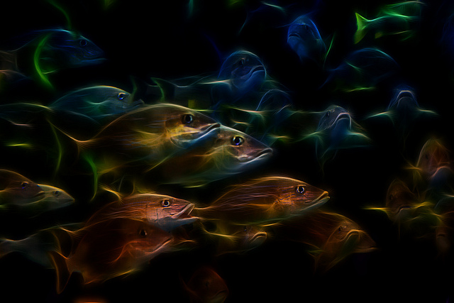 A photoillustration of a school of fish