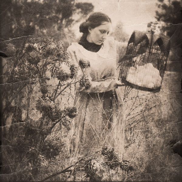 A photo in old-fashioned style of a woman picking cotton