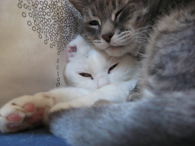 A white cat and a grey tabby curled up together.