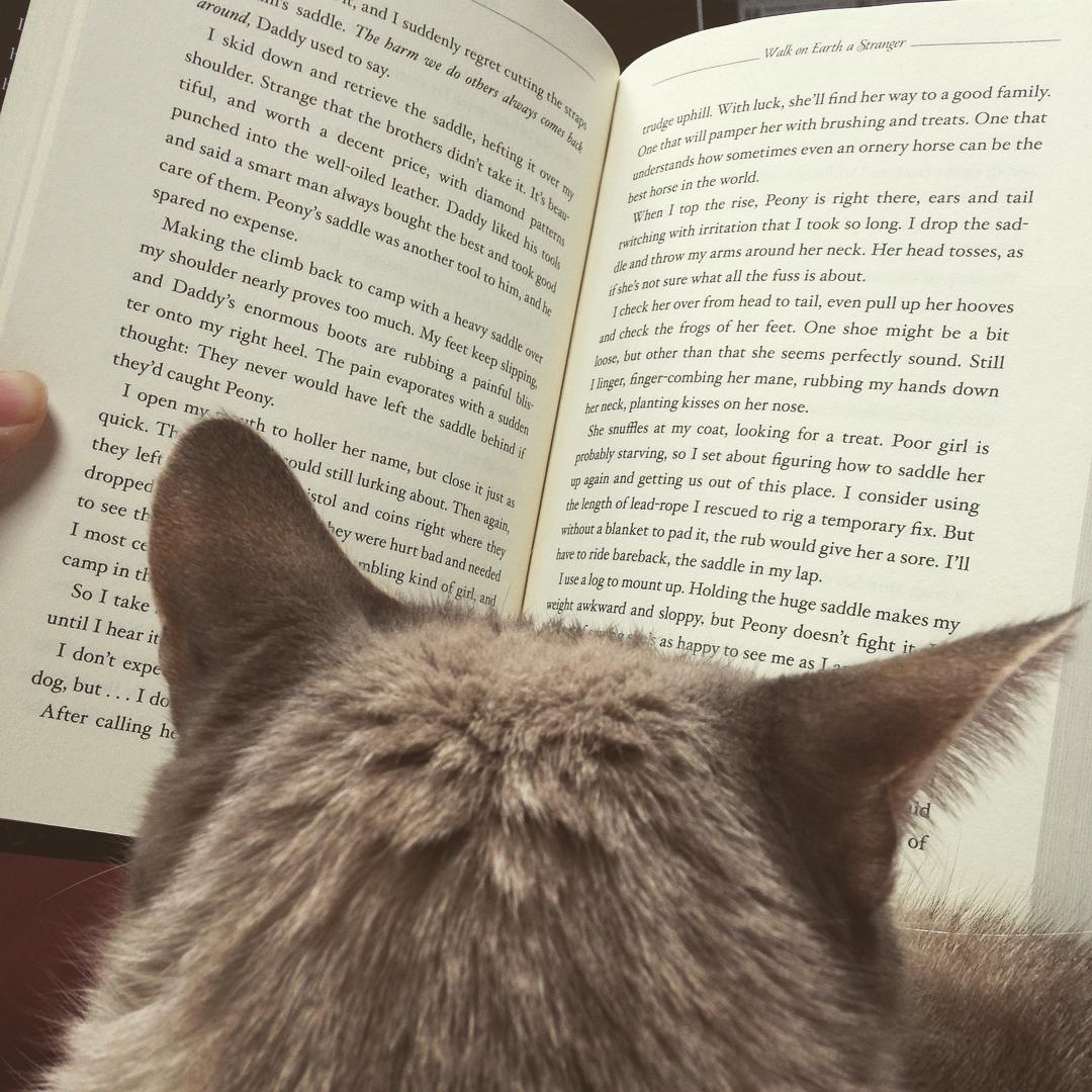 A cat who appears to be reading a book.