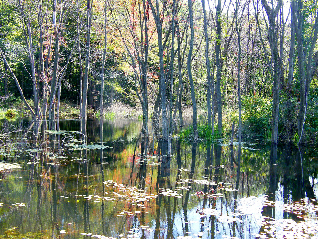 A lovely swamp in the daylight.