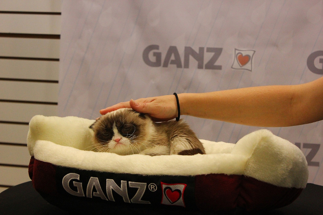 Grumpy Cat looking upset as someone pets her.