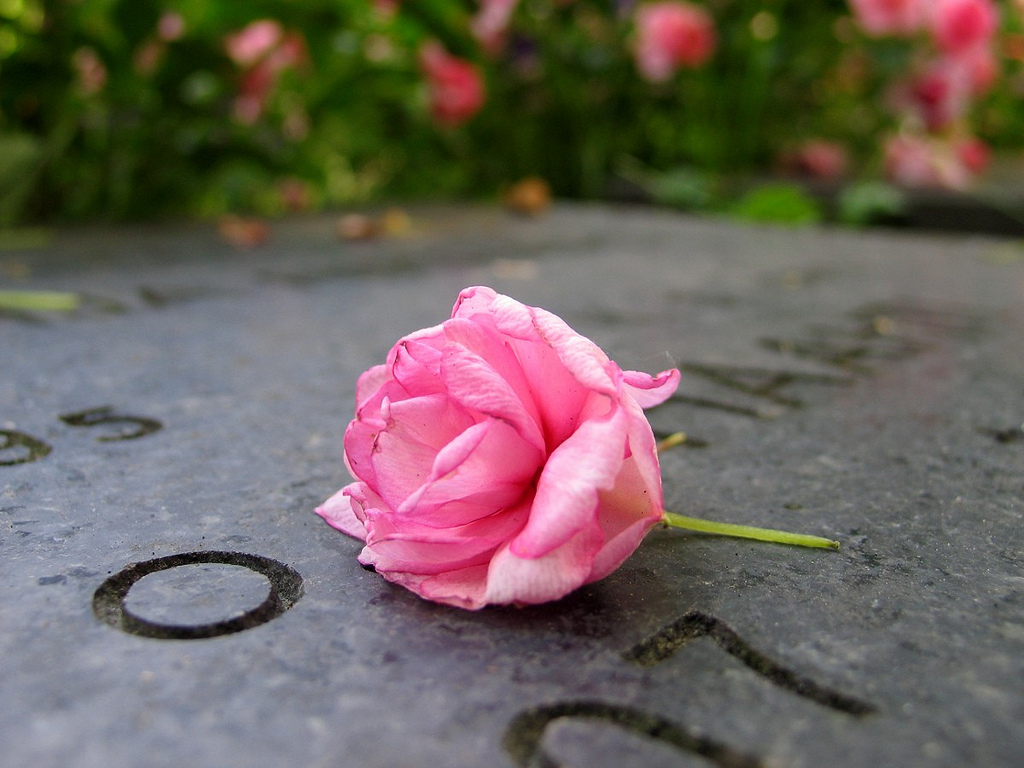 A rose on a headstone