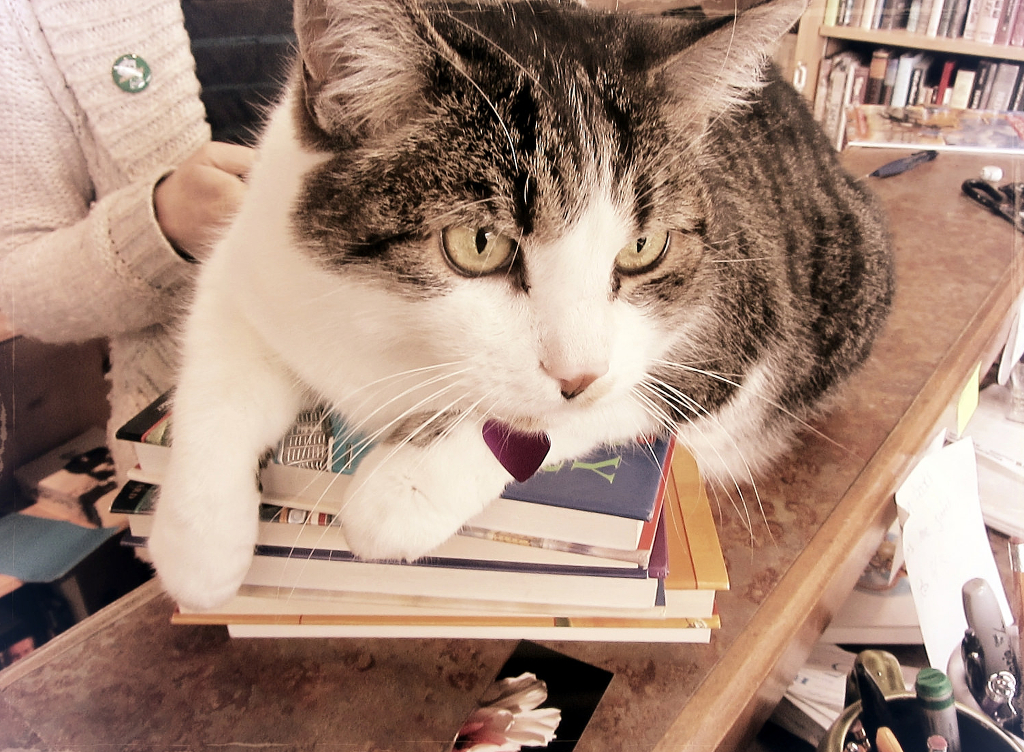 A tabby cat sitting smugly on the counter of a bookstore.