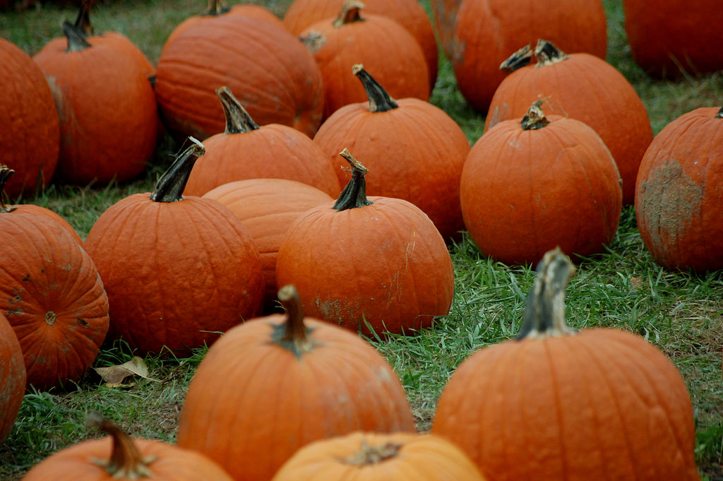 An array of pumpkins.
