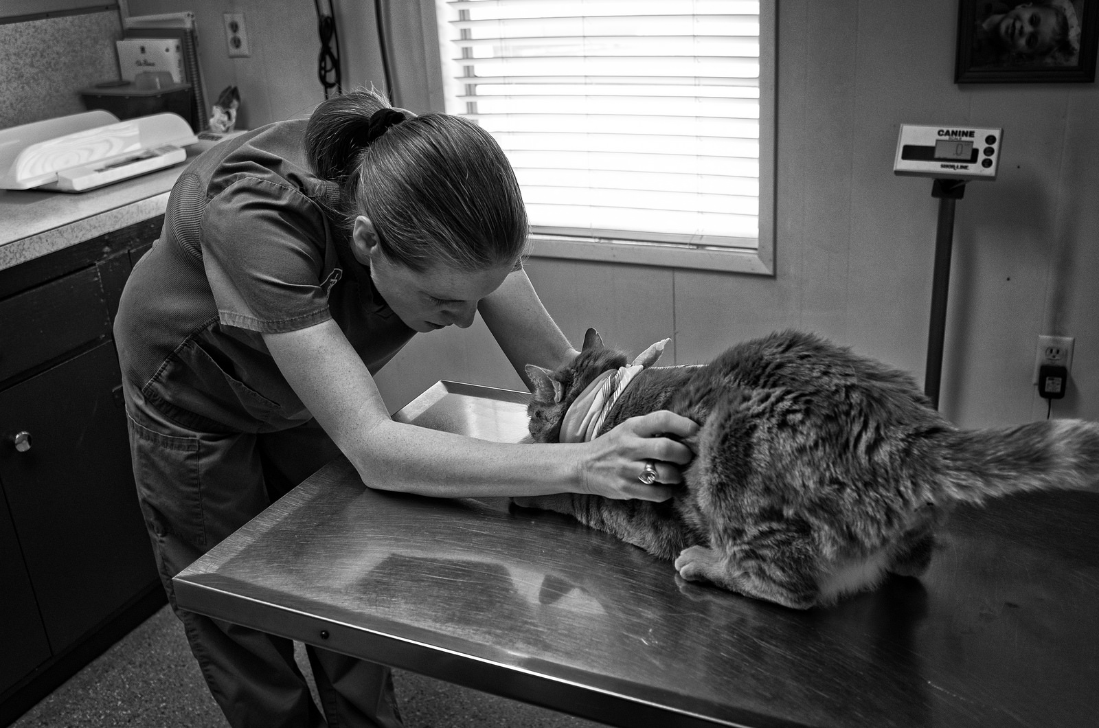 A veterinarian examining a cat.