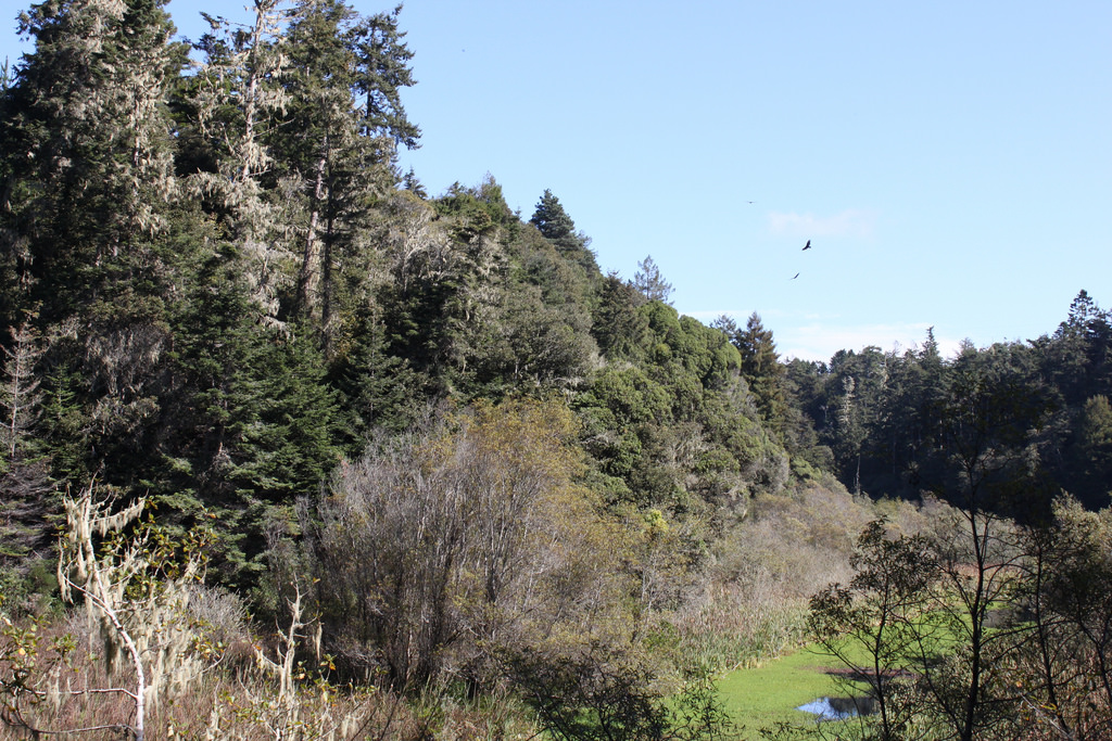 A view along Pudding Creek on a sunny day.